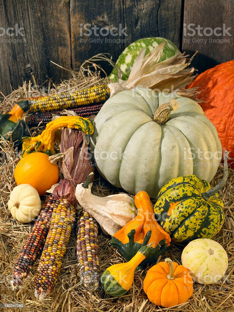Autumn still life with pumpkins and squash royalty-free stock photo