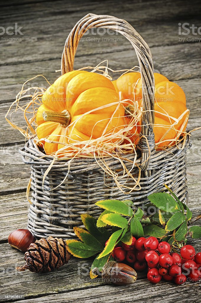 Autumn still-life with fresh pumpkins in basket royalty-free stock photo