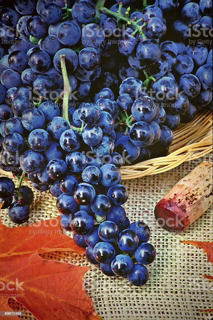 Autumn still-life with grapes royalty-free stock photo