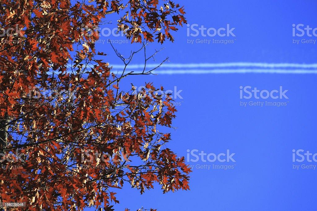 Autumn streaks royalty-free stock photo
