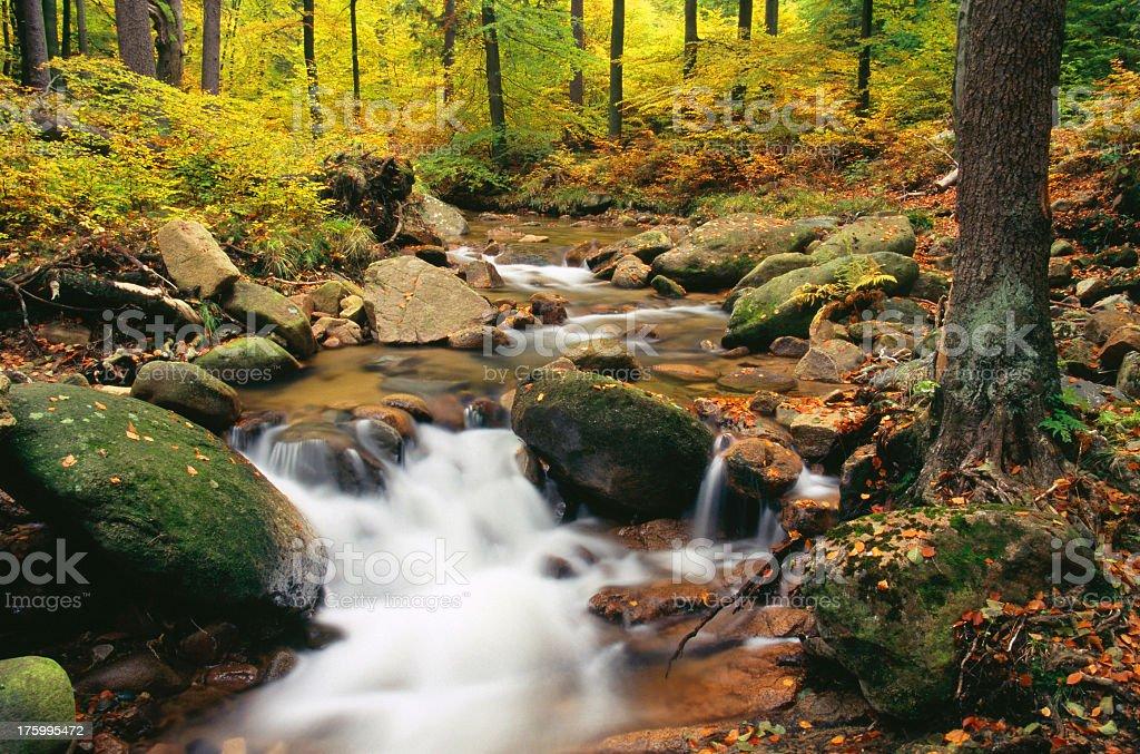 Autumn Stream III royalty-free stock photo