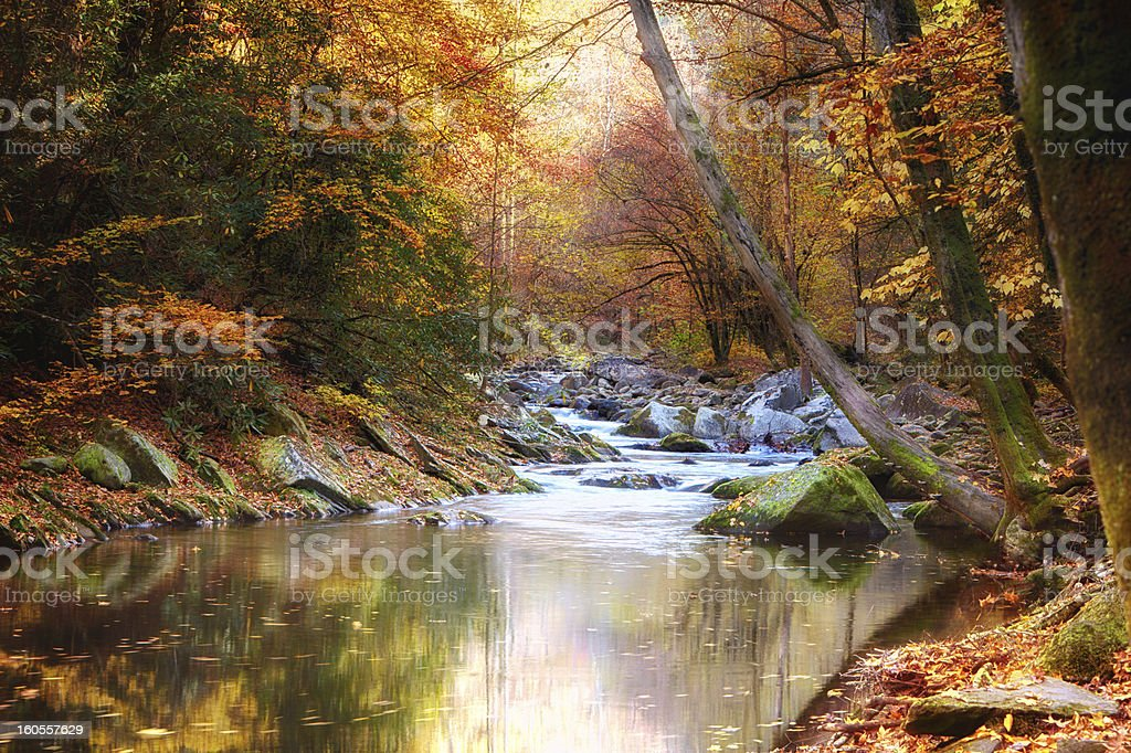 Autumn Stream lined with trees royalty-free stock photo