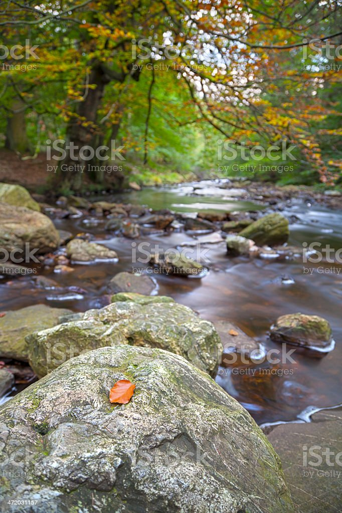 Autumn Stream Long Exposure stock photo