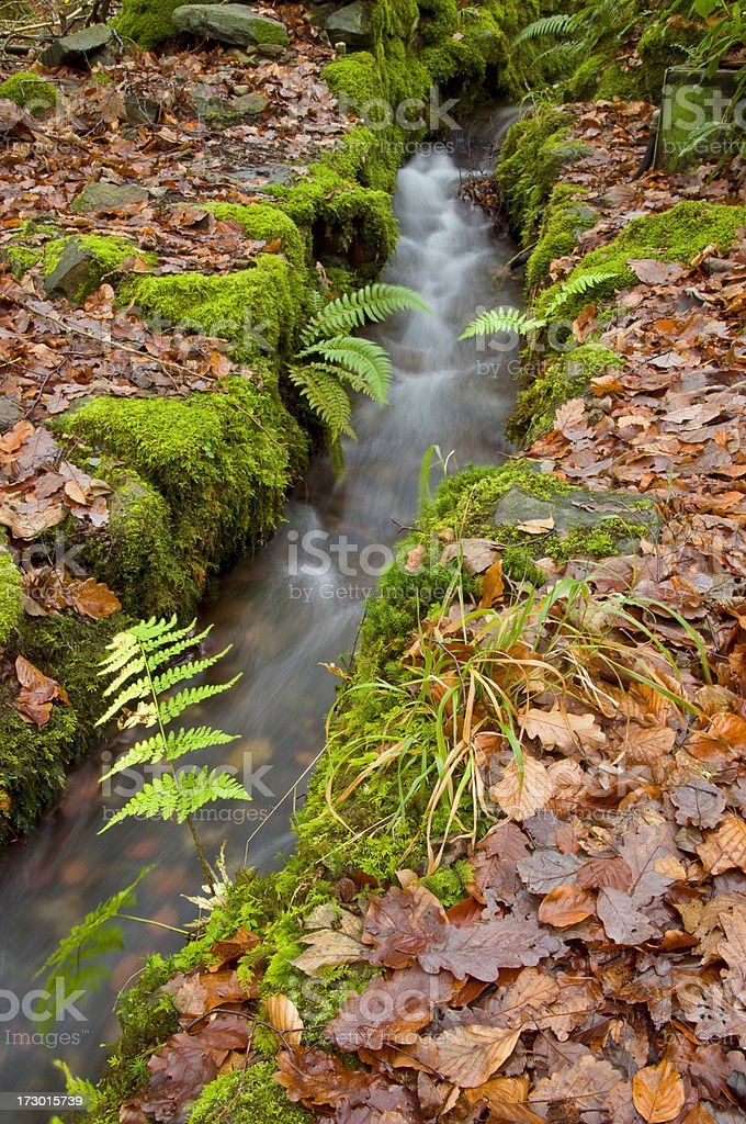 Autumn stream royalty-free stock photo