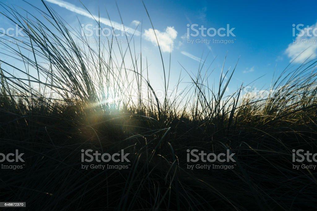Autumn Sun flare through Dune grasses at Fistral Beach, Newquay stock photo