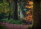 Autumn sun ray