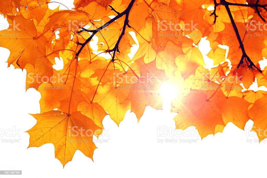Autumn sun rays royalty-free stock photo