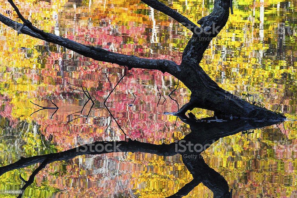 Autunno albero incasso foto stock royalty-free