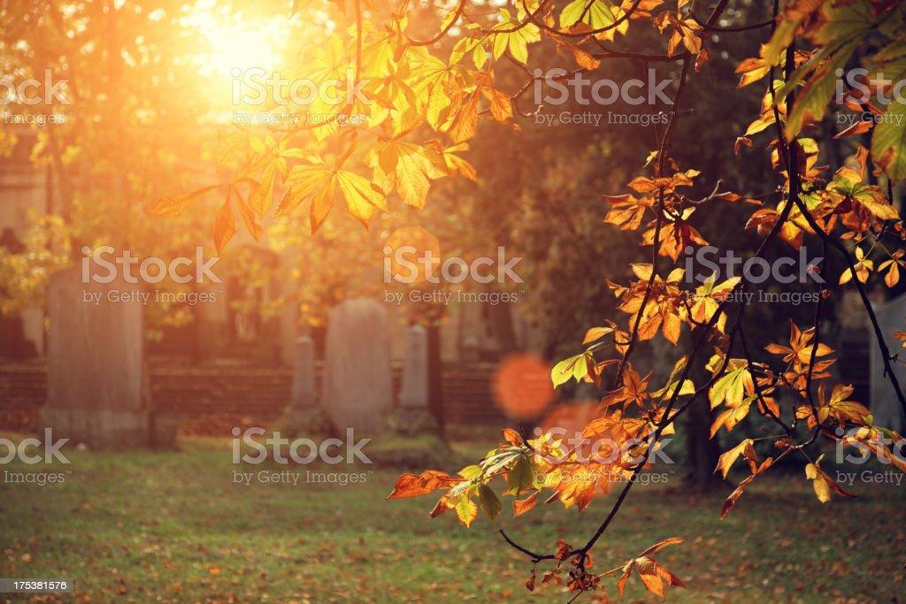 autumn sunlight in the cemetery stock photo