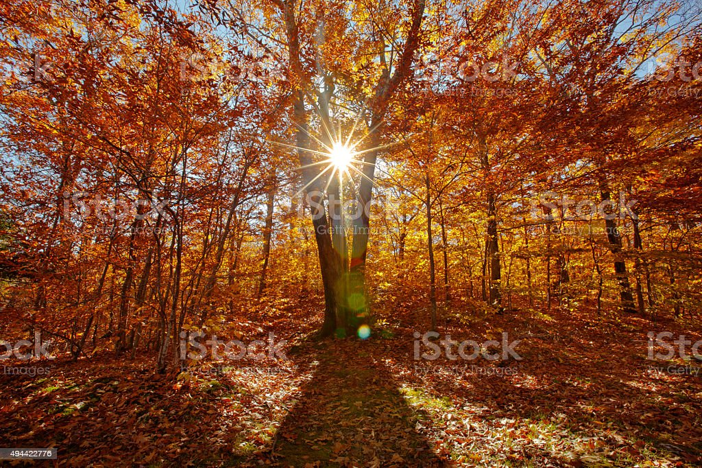 Autumn Sunlight stock photo