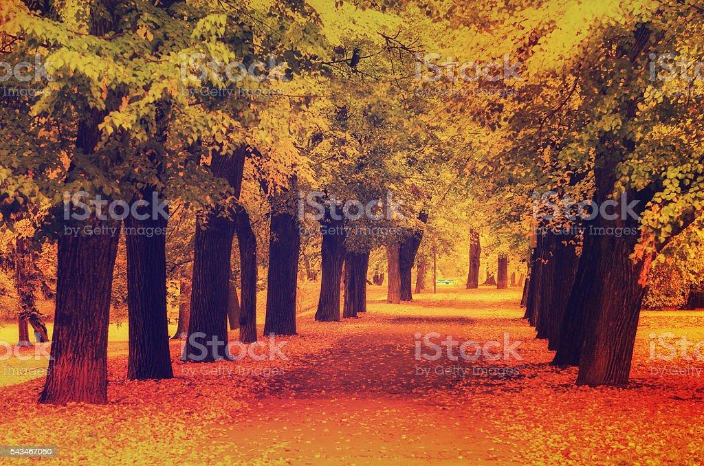 Autumn sunny park stock photo