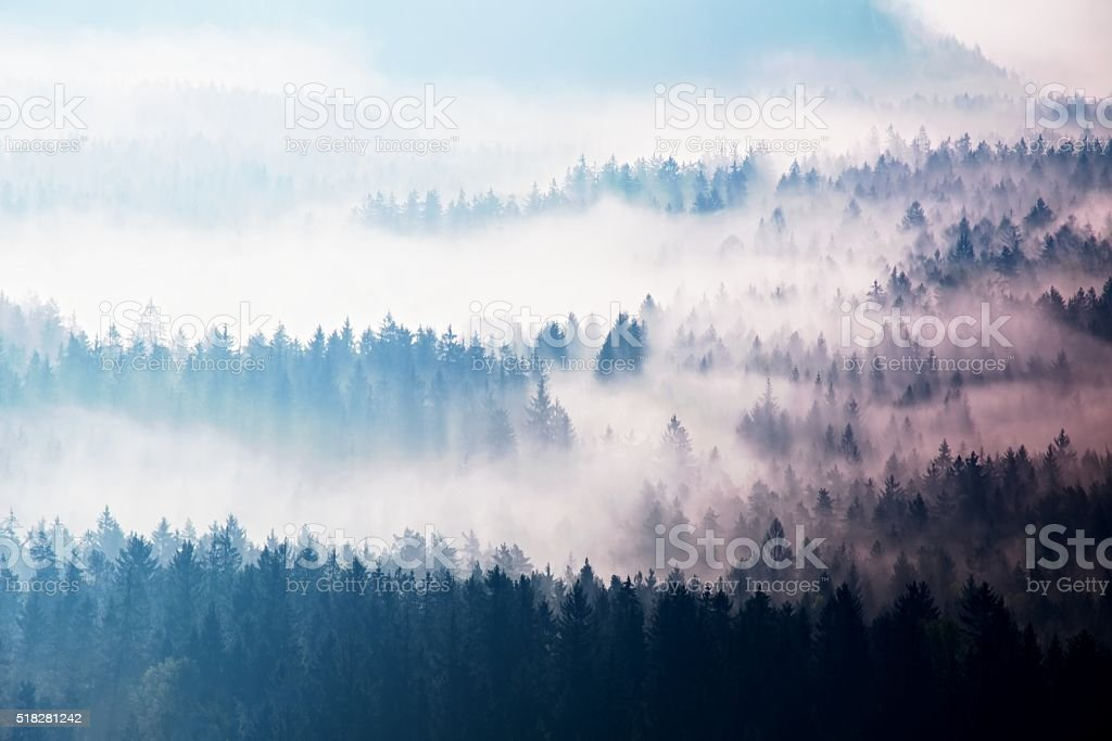 Autumn sunrise forest in beautiful mountain within inversion. stock photo