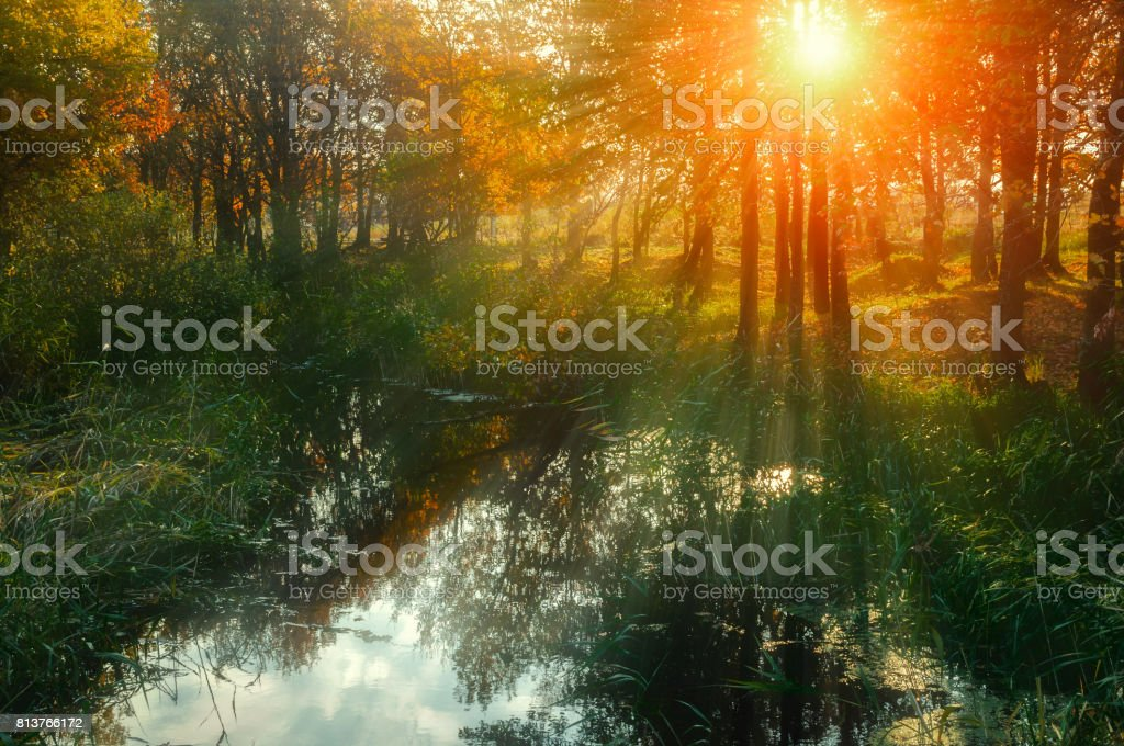 Autumn sunset landscape - forest trees near the pond stock photo