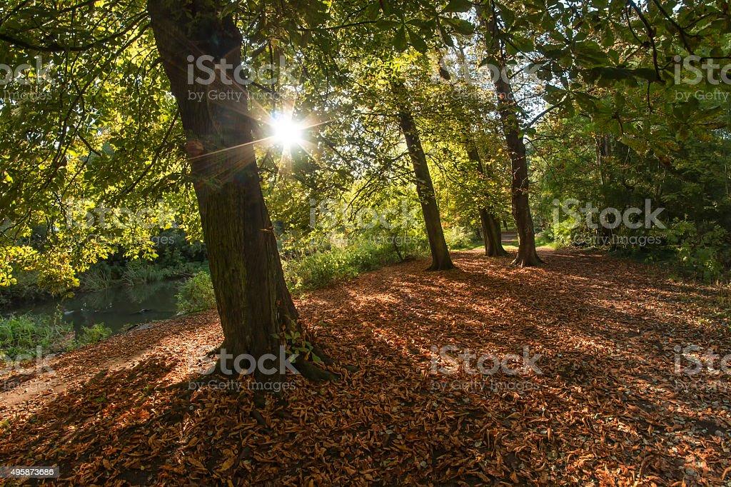 Autumn Sunshine in Crane Park stock photo