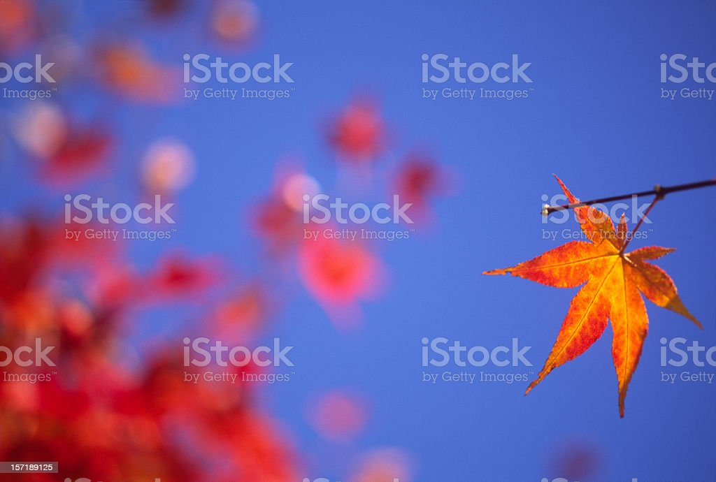 Autumn Survival Leaf royalty-free stock photo