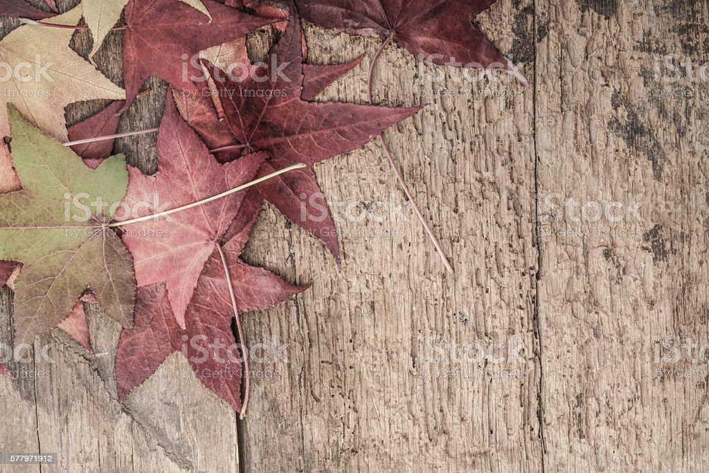autumn template with colorful leaves on wooden surface stock photo
