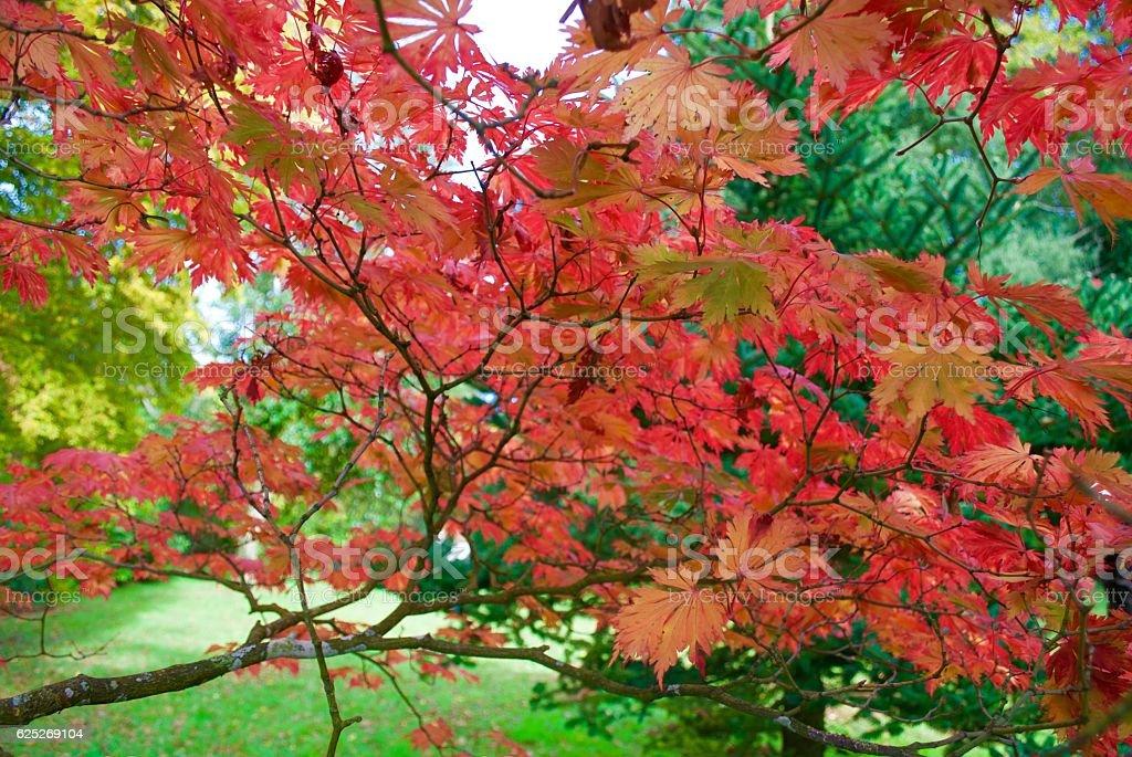 Autumn Textures stock photo