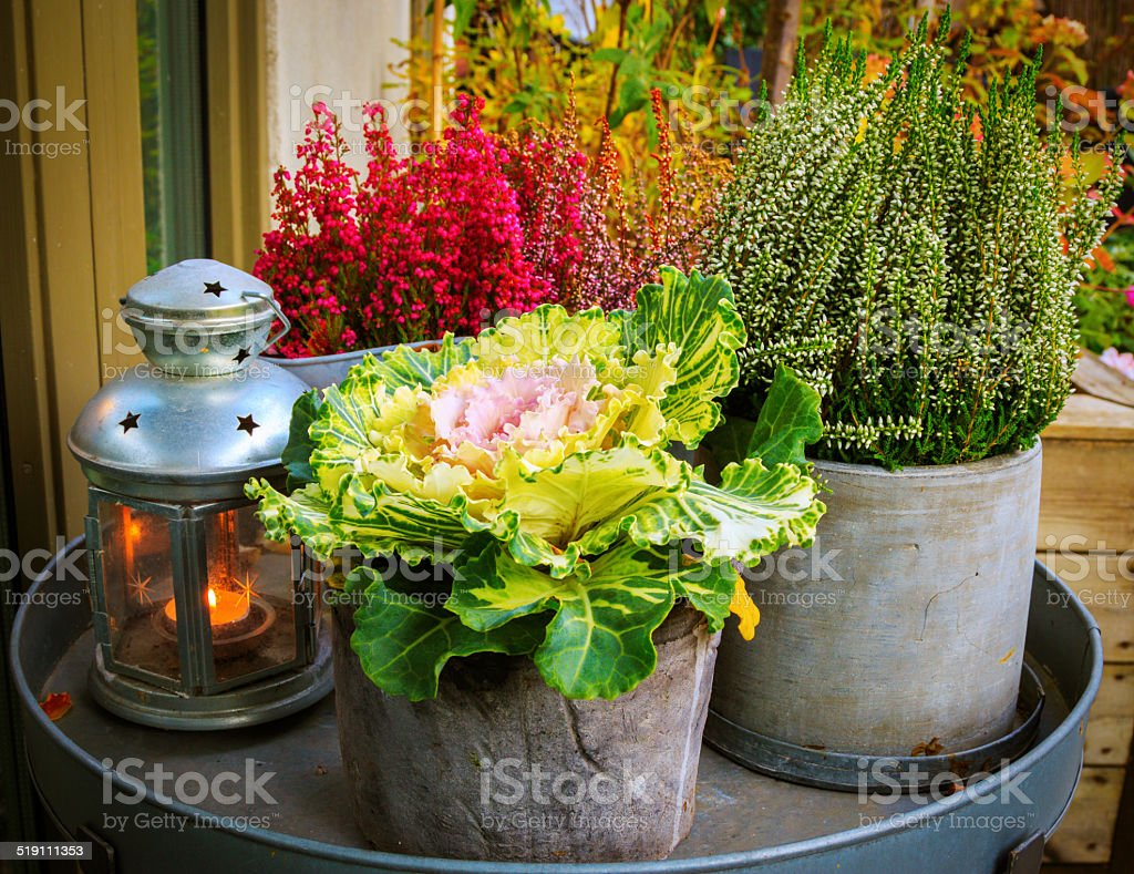 Autumn themed flowers and candle lamp stock photo