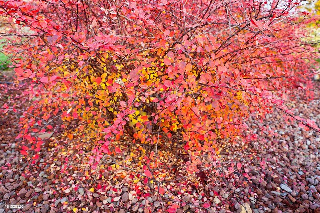 Autumn Themes stock photo
