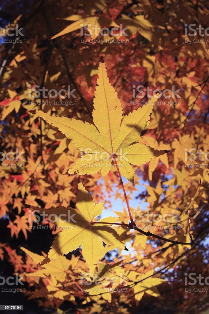 Autumn tint like galactic system royalty-free stock photo