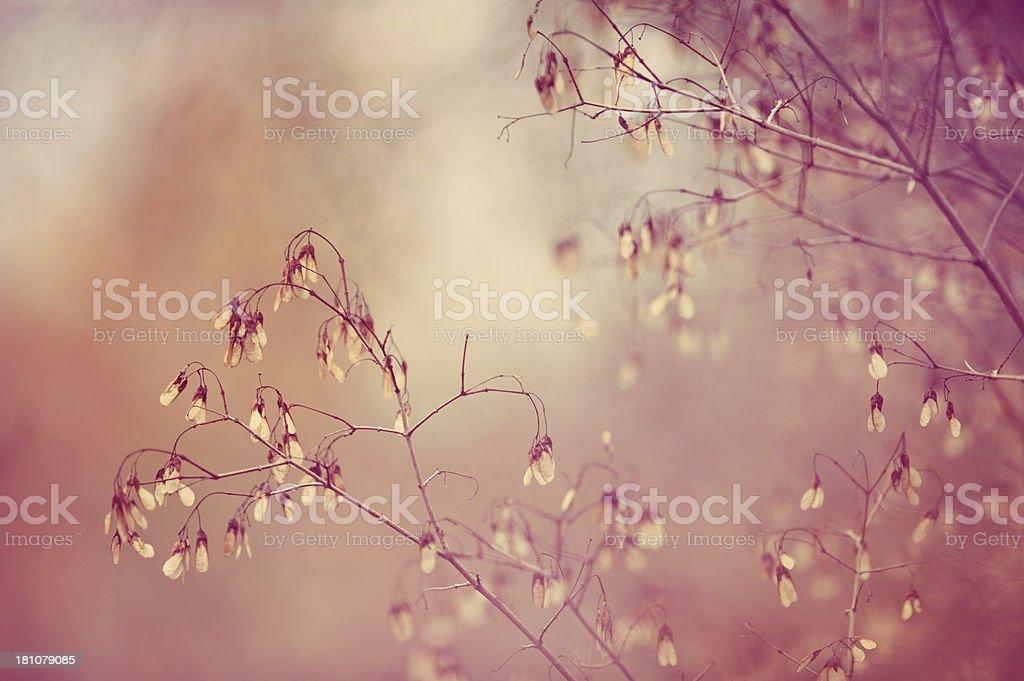 Autumn tones stock photo