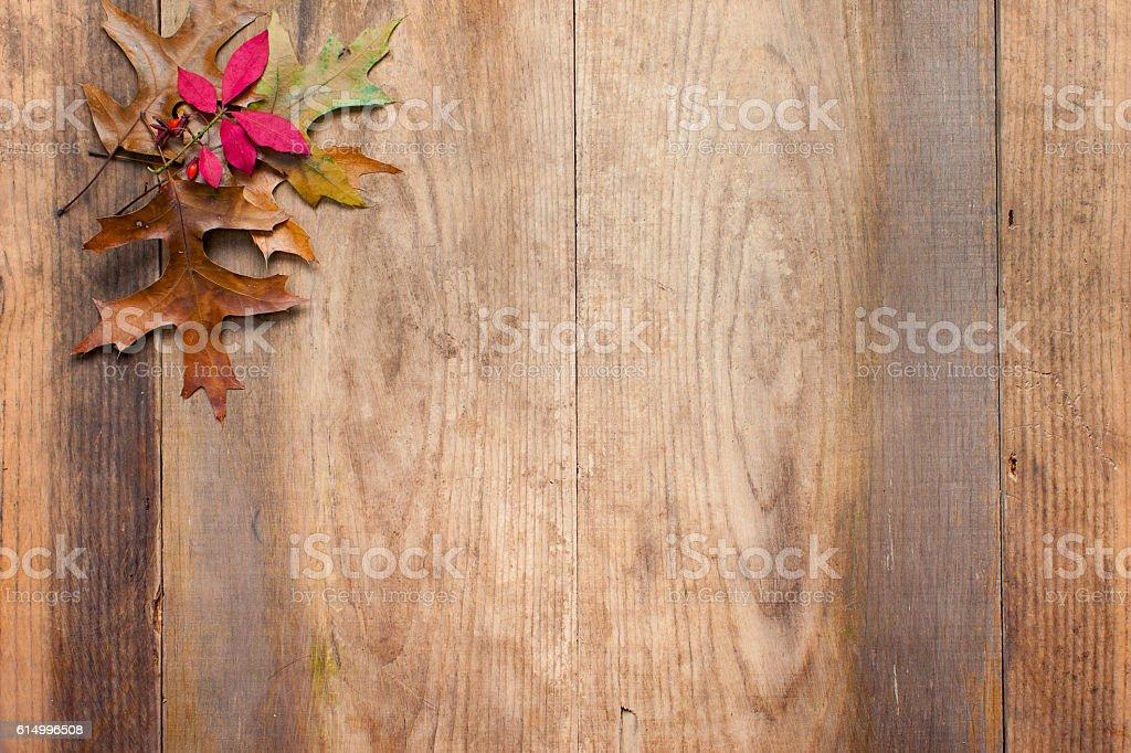Autumn Touch stock photo