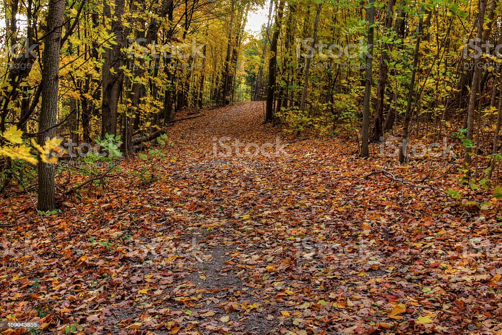 Autumn Trail in Sunlight royalty-free stock photo