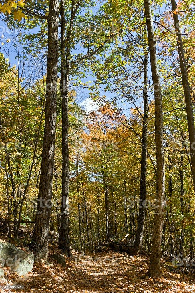 Autumn Trail royalty-free stock photo