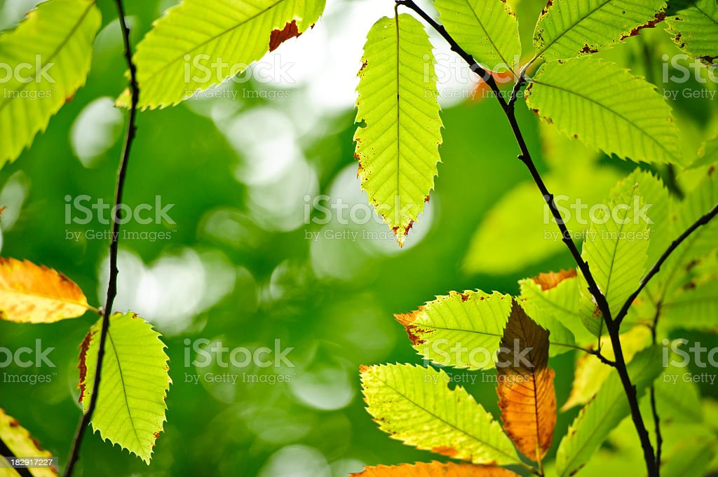 Autumn Transformation royalty-free stock photo