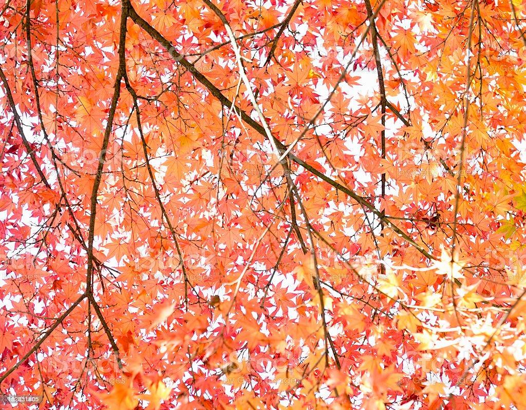 Autumn Tree Abstract royalty-free stock photo