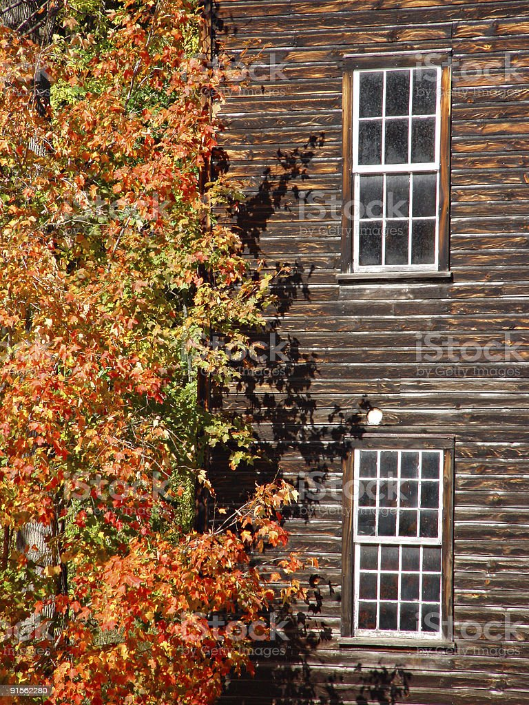 Autumn tree against building royalty-free stock photo