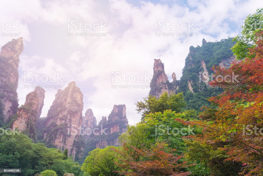 Autumn tree and foliage in mountain at Zhangjiajie National Forest Park, Hunan, China stock photo