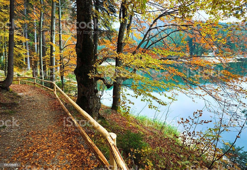 Autumn tree and Synevir lake royalty-free stock photo