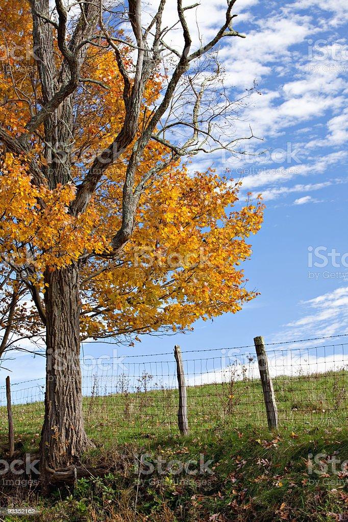 Autumn Tree, Fence and Sky royalty-free stock photo