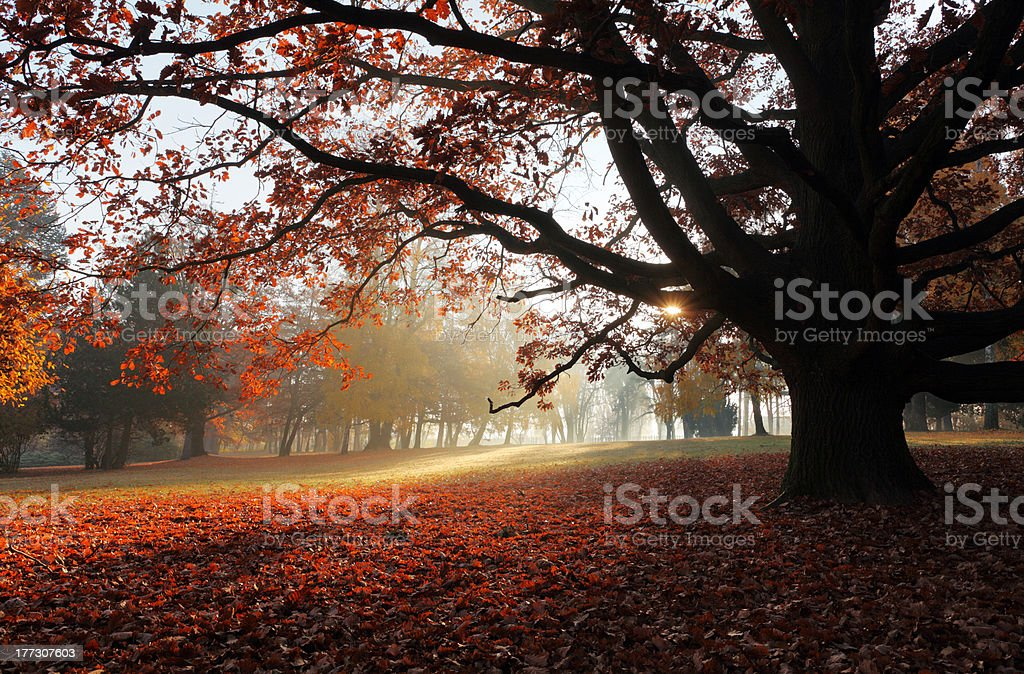 Autumn tree in a park royalty-free stock photo