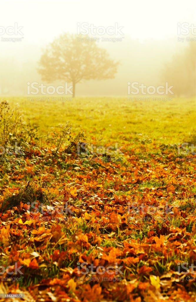 Autumn Tree in Fog stock photo