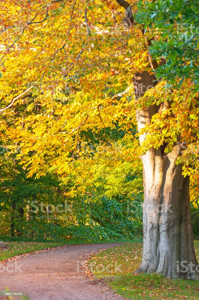 Autumn tree in the park royalty-free stock photo