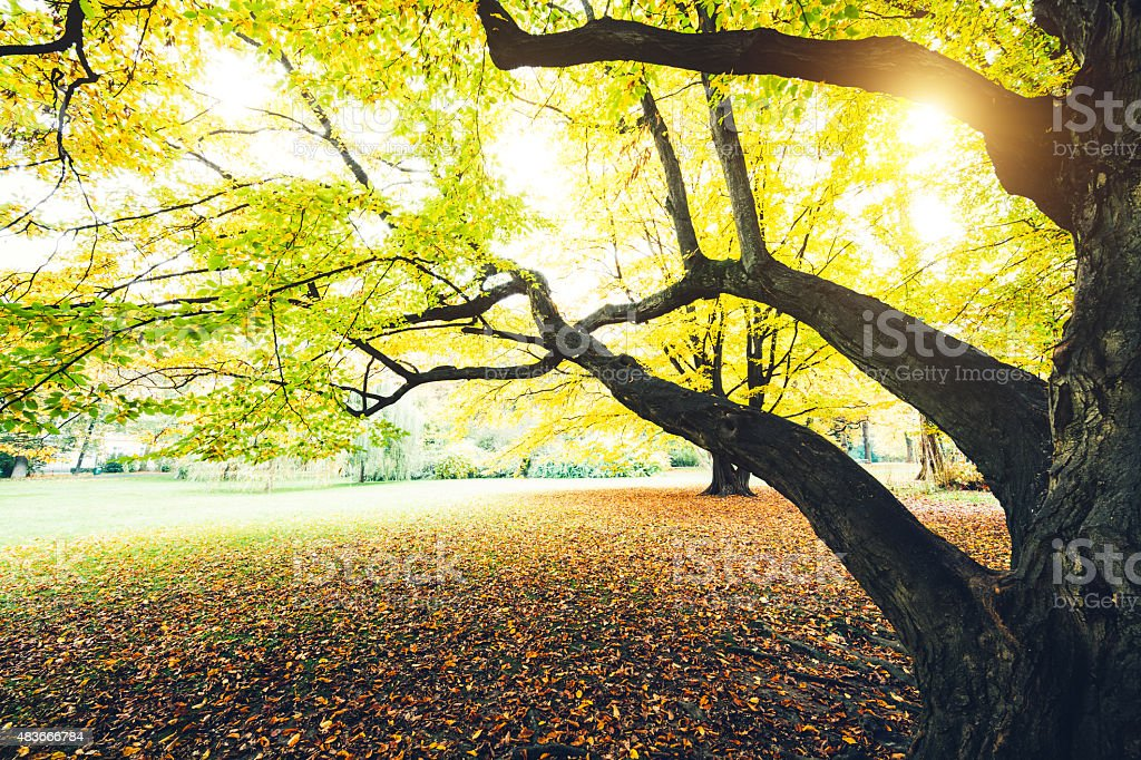 Autumn Tree In The Park stock photo