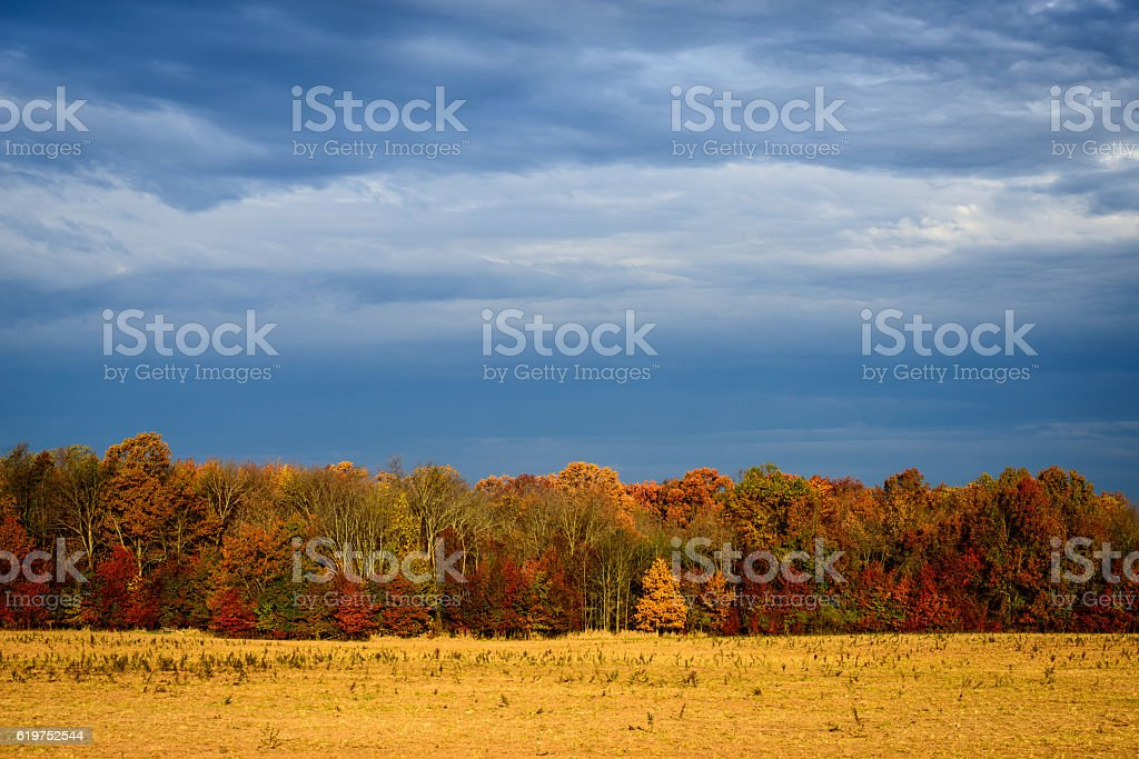 Autumn Tree Line stock photo