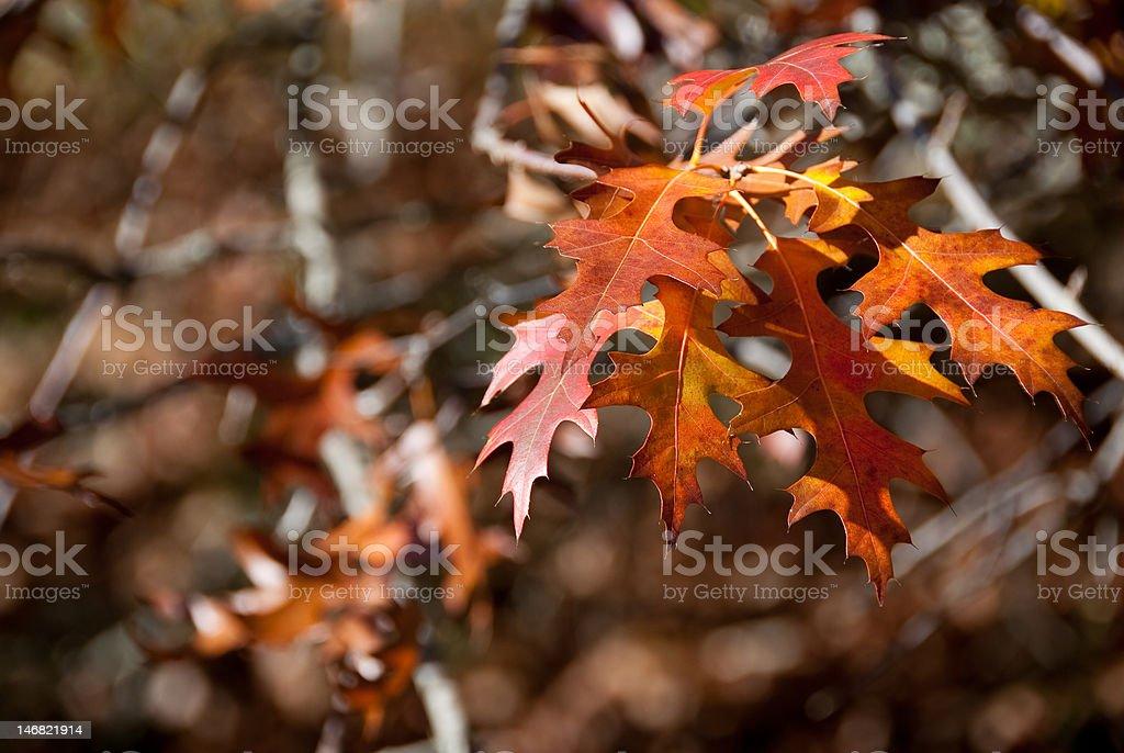De otoño tree foto de stock libre de derechos