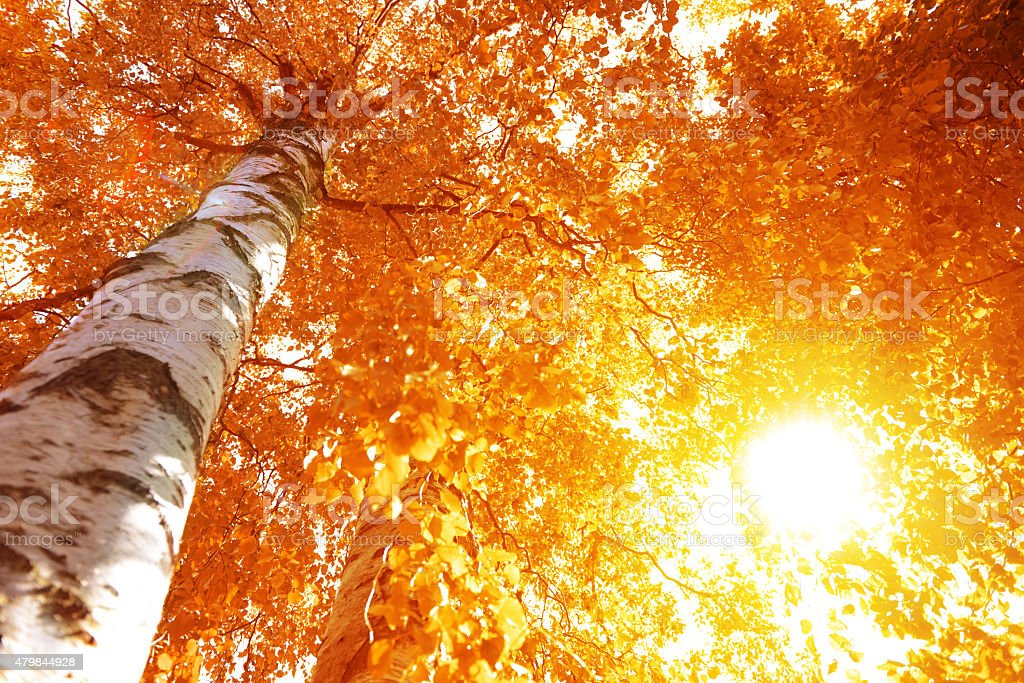 Autumn tree with  leaf close-up stock photo