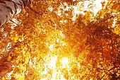 Autumn tree with orange leaf close-up
