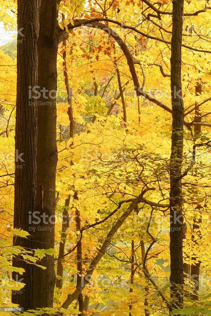 Autumn Trees 2 - Youngstown, Ohio royalty-free stock photo
