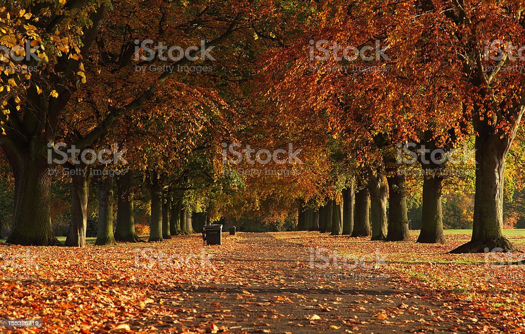 Autumn Trees Abington Park Northampton stock photo