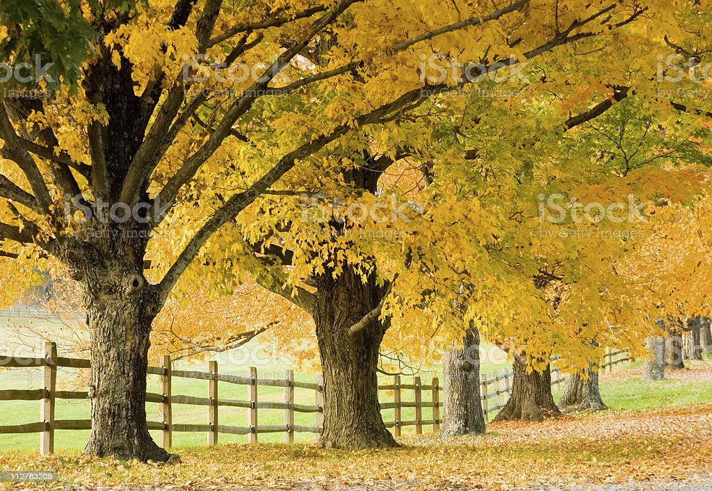 Autumn trees along wooden fence royalty-free stock photo