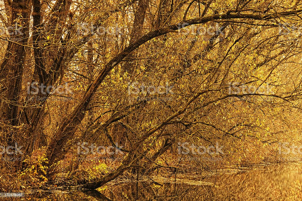 Autumn Trees And Their Reflection In The Water royalty-free stock photo