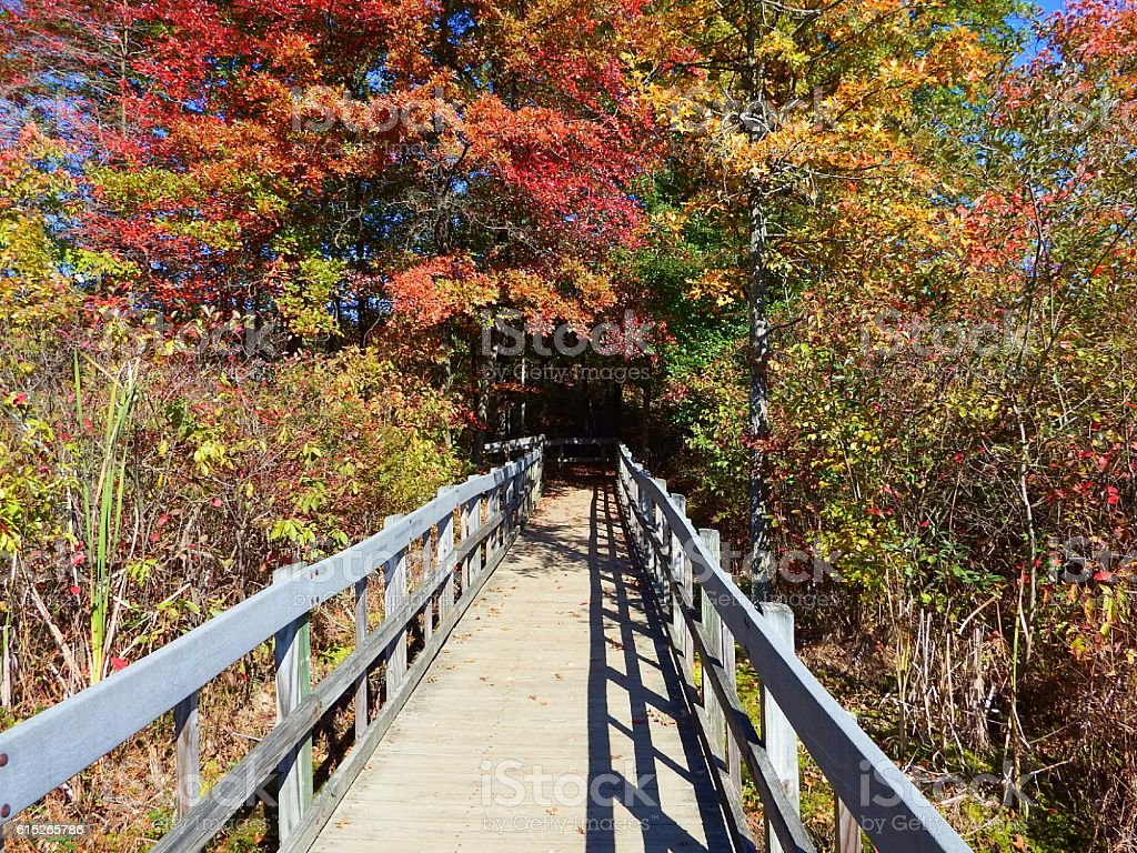 Autumn trees and walkway stock photo