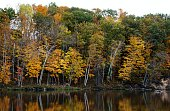 Autumn Trees at the river