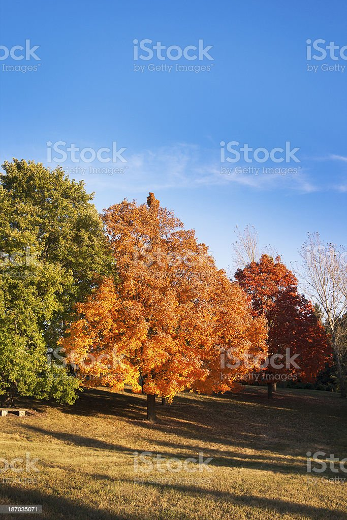 Autumn Trees Displaying Green, Gold, and Red Leaf Fall Color royalty-free stock photo