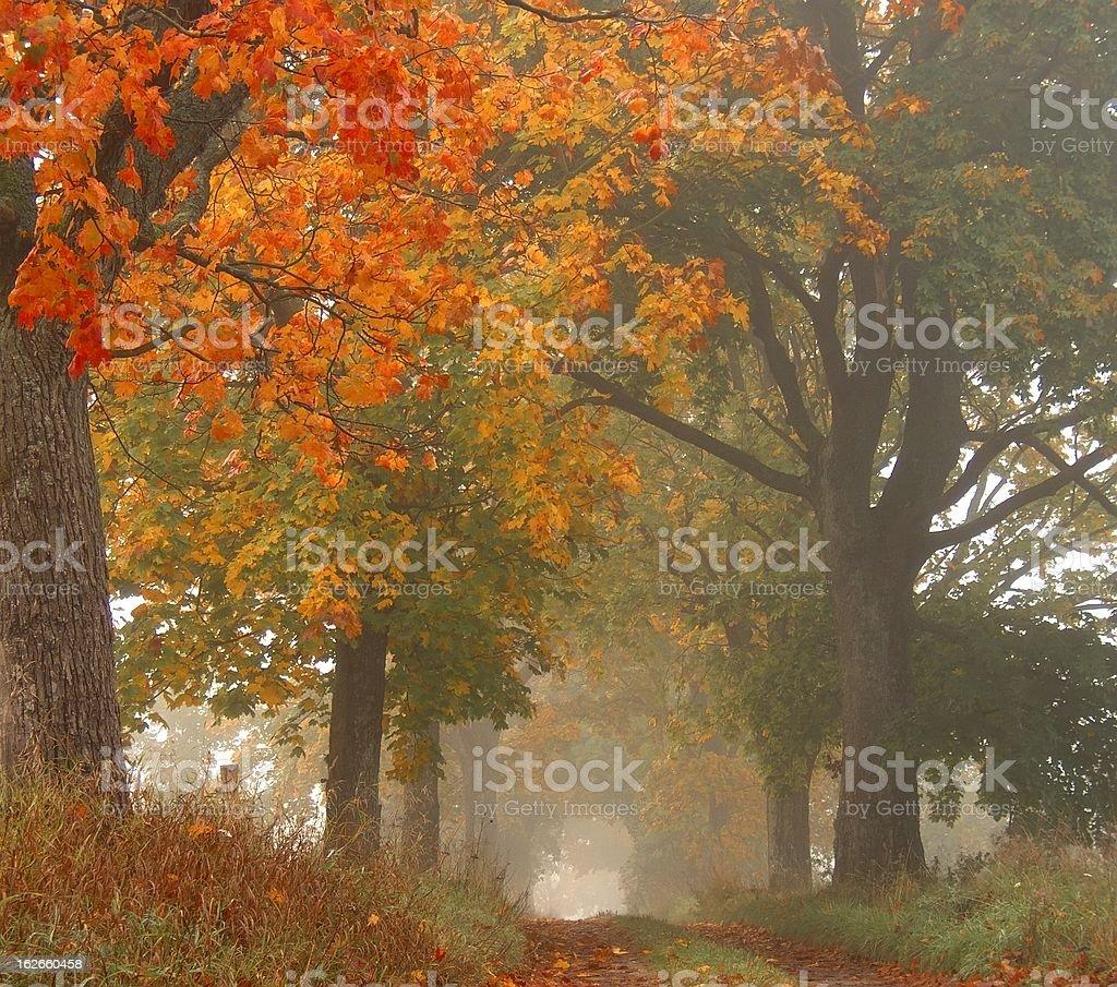autumn trees in fog royalty-free stock photo